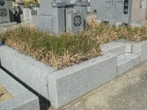お墓雑草防止対策前